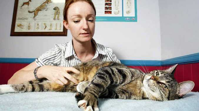 Animal Welfare League manager Aisling O'Brien with Murphy the cat, who has gone from 9kg to 6.5kg.