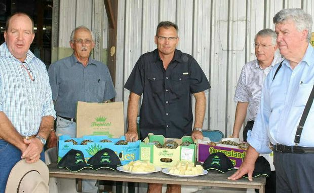 LNP Candidate Bruce Young, Tropical Pines agronomist Col Scott, marketing manager Joe Craggs and CEO Derek Lightfoot with Senator Ron Boswell at Yeppoon's Tropical Pines farm discussing the possible importation of Malaysian pines into Australia.