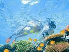 Environmentalists wary of $40 million  Barrier Reef Trust