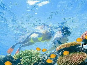 Environmentalists wary of $40 million  Barrier Reef Trust