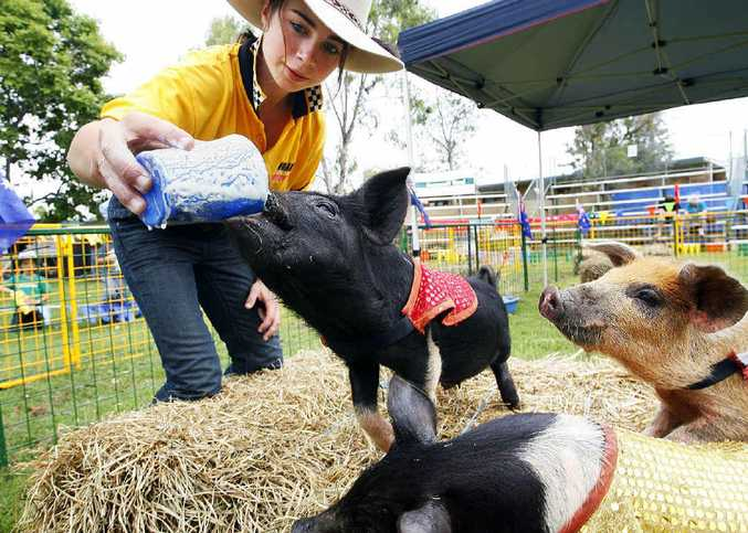 Shaunena Duffy feeds a piglet some milk ahead of the pig racing at the annual Peak Pig Races and Music Muster.
