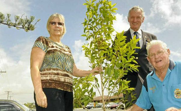 JOB DONE: Pictured at one of the trees planted in the first stage of Ballina's War Memorial Grove replanting are (from left) council's manager open spaces and reserves Jillian Pratten, Ballina RSL Sub-Branch president Bill Moore and past president Max Lewis.