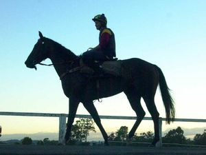 Gympie trainers snap up yearlings