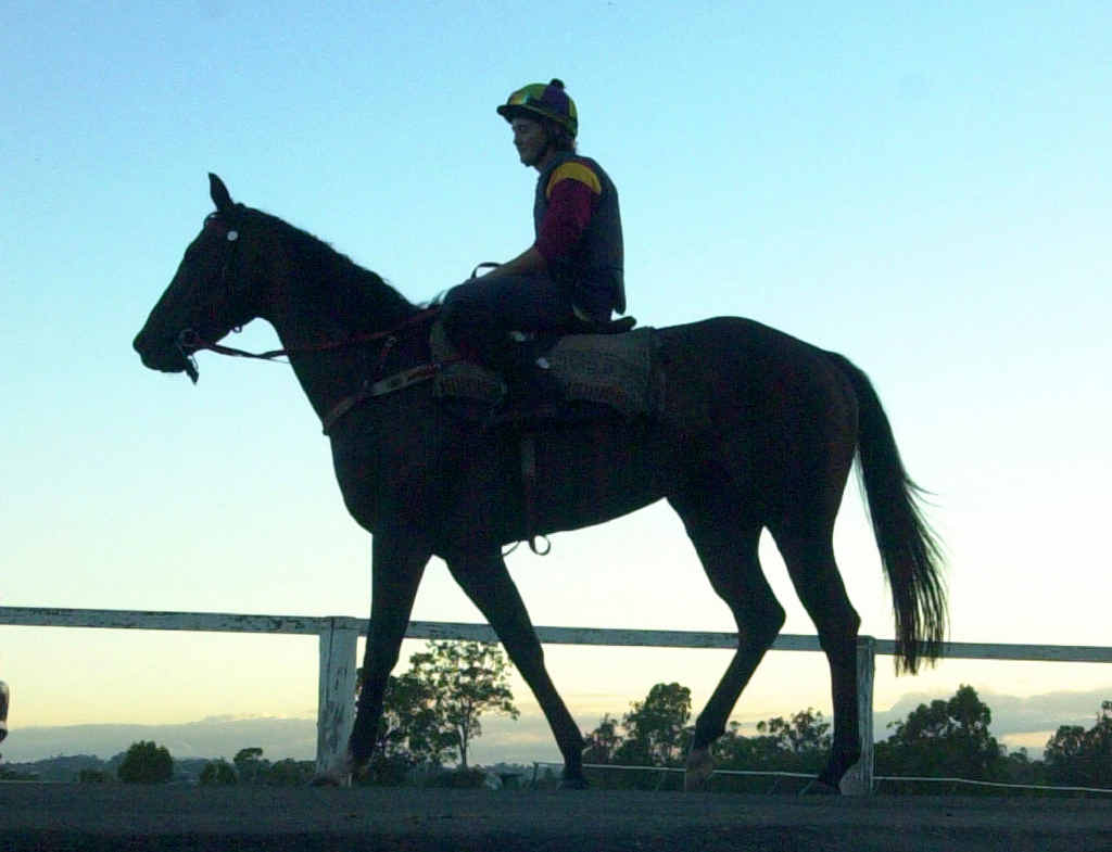 A jockey heads out for early morning trackwork at the Gympie showgrounds.