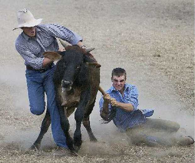 Emerald cutting horse competitor Trent Dudley tries his hand at a cattle sport of a different kind.