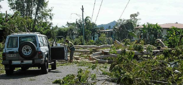 DAMAGE: Fallen trees and power lines down in Beattie Crescent, Vincent. Photos: Alf Wilson