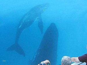Whales ahoy, matey