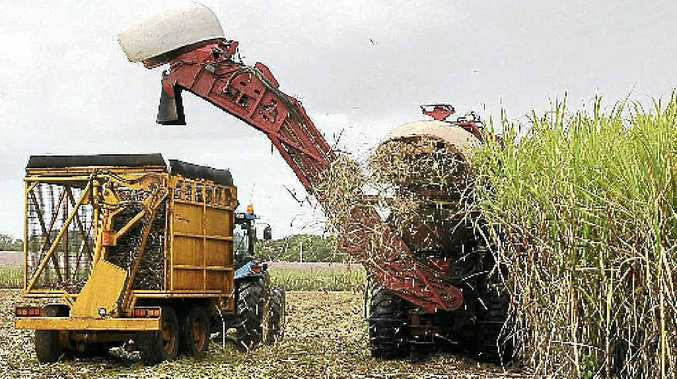 "Diuron is seen as ""very, very important"" to cane growers."