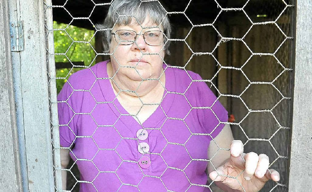 East Bundaberg resident Laurene Wolff received a shock when she was awoken by a fox harassing her chooks.