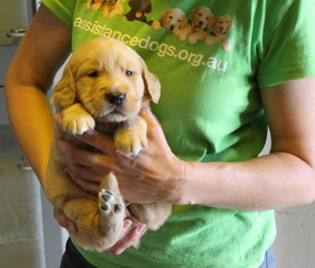A guide dog puppy is coming to Settlers Village in Rockhampton.
