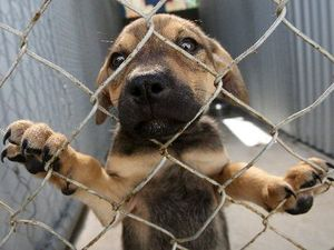 Obscure 1910 law banning pet shops finally removed