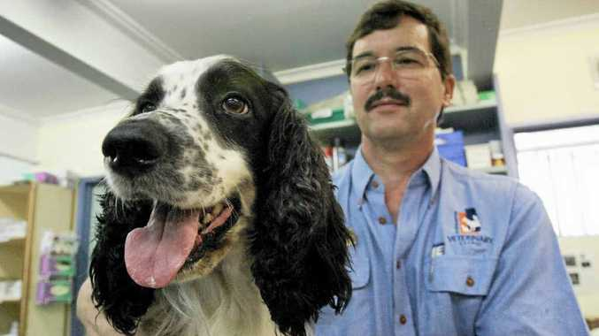 Tessa the English Springer spaniel with Rockhampton Veterinary Clinic's Dr Barrett Hasell who is warning dog owners about the heartworm outbreak.