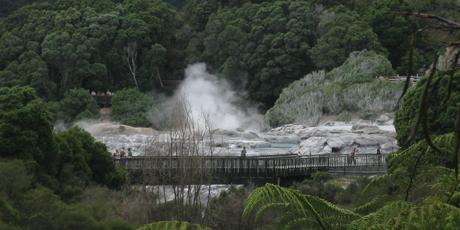 Te Puia's geysers send plumes of steam skyward.