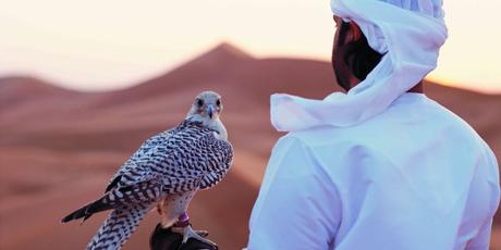A falcon in the Abu Dhabi desert.