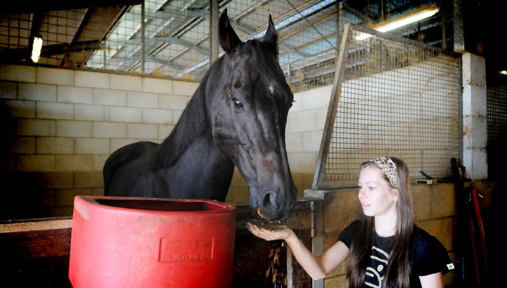 Frenardi being fed by Taylor Ratten will have some real competition on the Gympie track today.