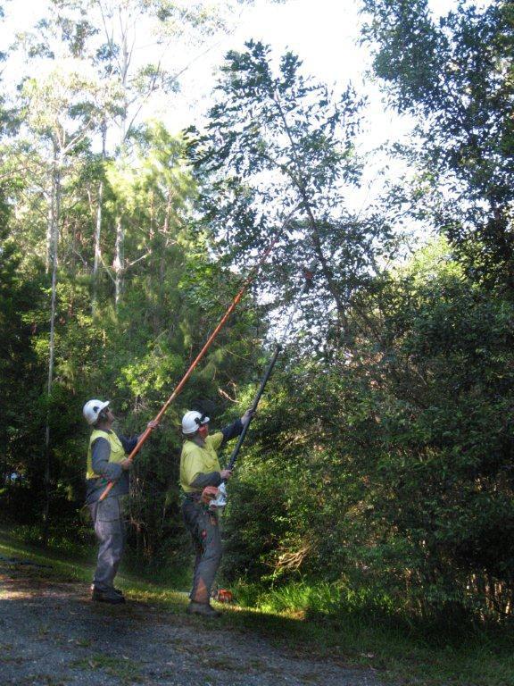 Essential energy crews trimming vegetation under power lines near Bellingen.