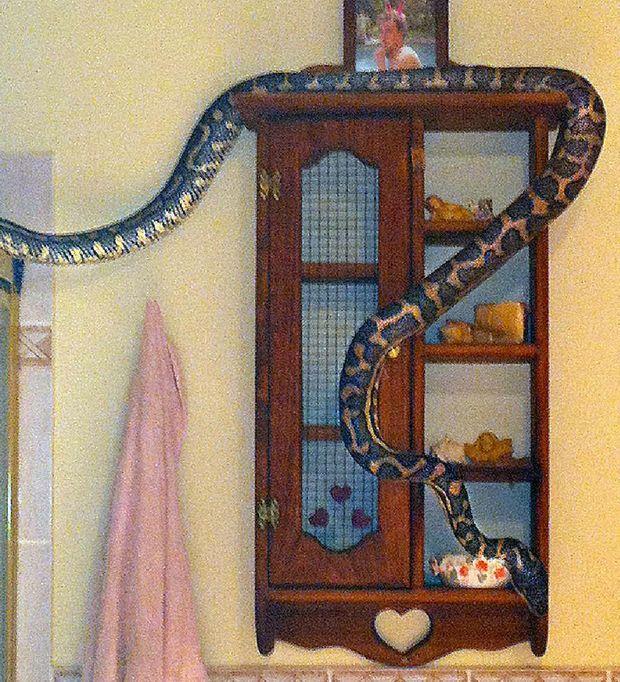 The three-metre python Elise Barry found slithering around her bathroom.