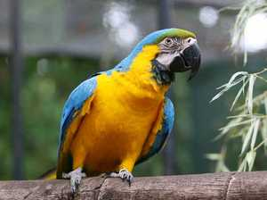 New macaws delight zoo visitors