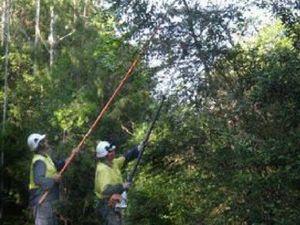 Negotiation key to tree removal