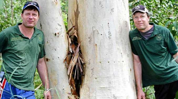 Ray (left) and Murray Chambers help rescue injured wildlife especially koalas.