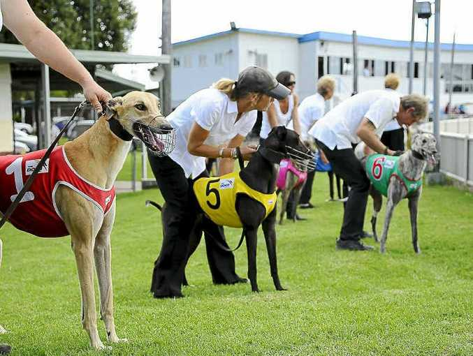 More greyhound meetings for Grafton