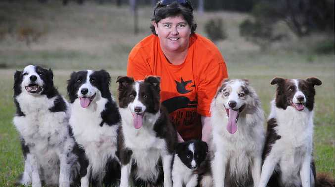 Alison Britton and her six border collies Buddy, GT, Coco, Logic, Focus and Rumour who are mad about Frisbees.