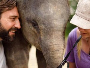 Amanda's fight for sick elephant