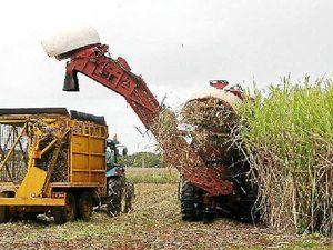 Farmers await top crop