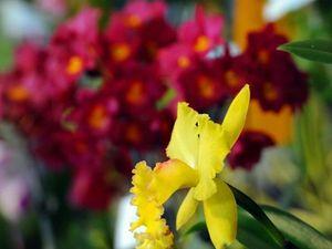 Secret of growing cymbidium orchids