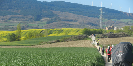 Walking through fields of canola en route to Puenta la Reina.