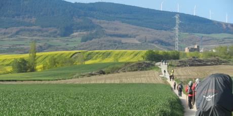 Walking through fields of canola en route to Puenta la Reina.