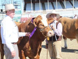 Murphy's Creek bull wins top gong