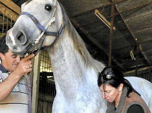 No horsin' around for physio