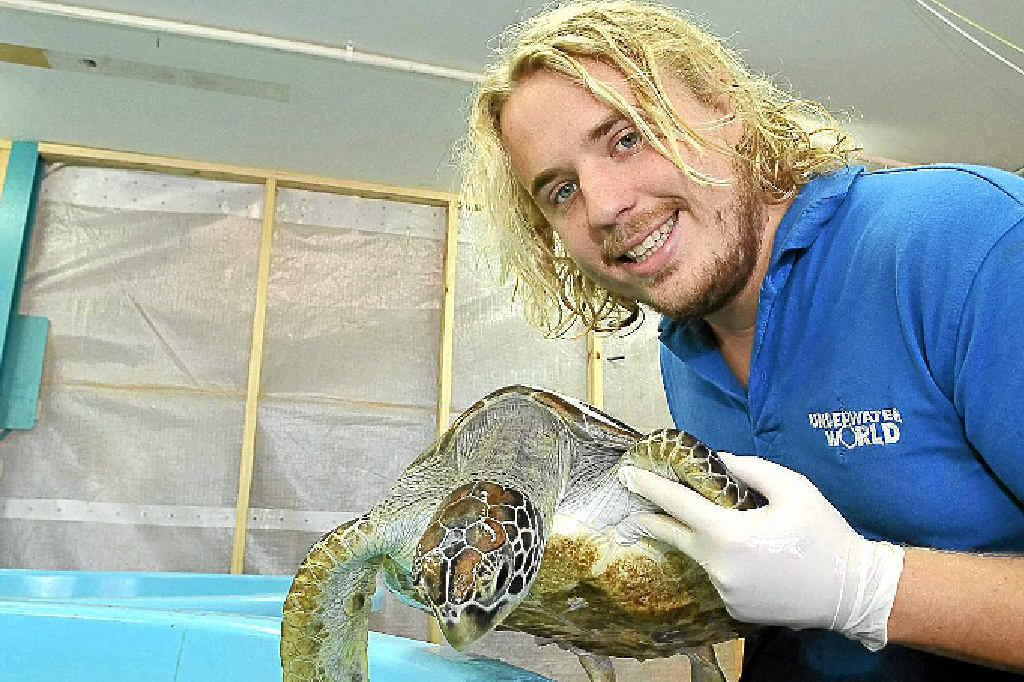 UnderWater World lead aquarist Jesse Hart will help celebrate World Turtle Day on Wednesday.