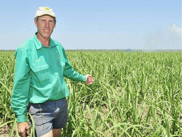 Cane farmer David Petersen on his property near Nikenbah.