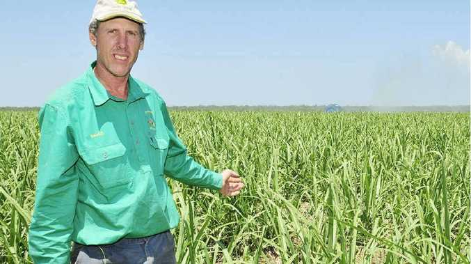 Cane farmer David Petersen on his property near Nikenbah.
