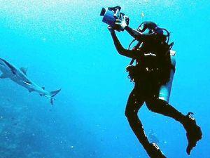 Defending our sharks