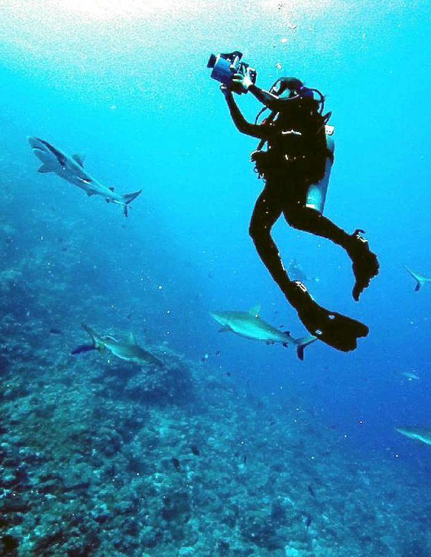 Madi Stewart photographs sharks in the Caribbean.