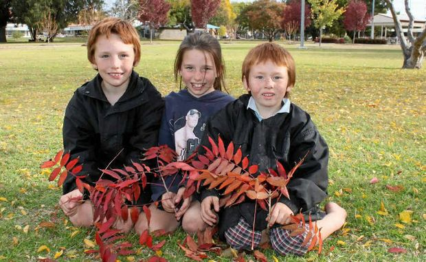For Brandon, 8, Emily, 7, and Liam Parry, 5, an excess of autumn leaves is a tell-tale sign the full onset of winter is not too far away.