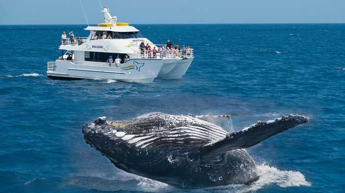PWF will launch its first whale watching tour next month.