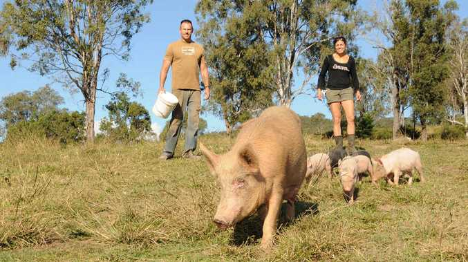 James and Chrissy Peskops have invested everything into their plan to start a free range pig farm at Kandanga.