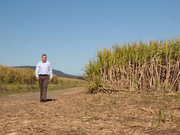 Canegrowers chief executive Steve Greenwood