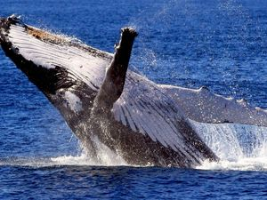 Whales spotted off Mackay