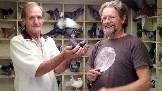 Chronicle photographer Alistair Brightman, right, gave Homer the lost racing pigeon a lift home to owner Harry Graham in Caboolture on Saturday.