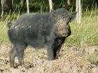 Feral pig hunters spend up big in Gympie