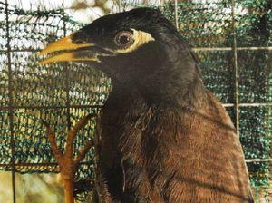 Help needed to eradicate birds
