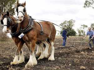 No horsing around