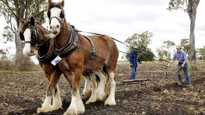 17-year-old Michael Martin competes with Clydesdales Clem and Jasper in the ploughing section at Jondaryan Woolshed's 2012 Working Draught Horse Expo.
