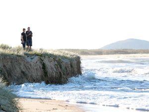 Dune revegetation bringing Maroochydore Beach back to life