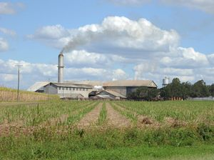 Fears for future of Bingera Mill